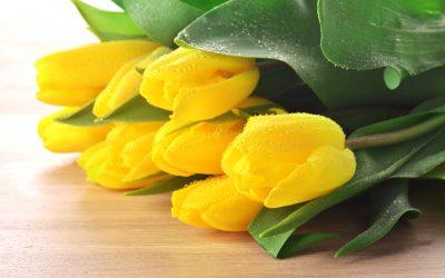 """Wir feiern die FRAUEN: """"MädelzAbend"""" am 07. März & Frauentagsfeier am 11. März 2020"""